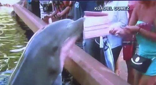 Dolphin-iPad